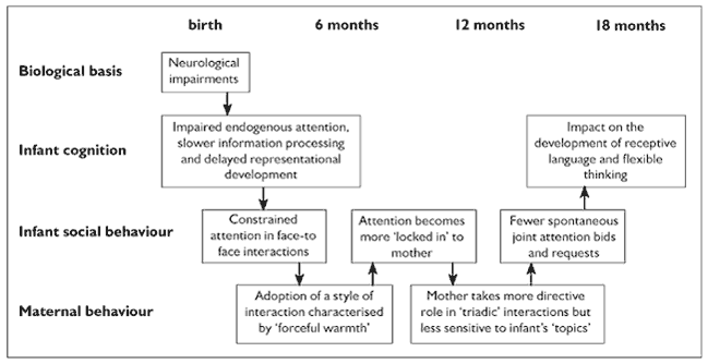 Figure 1 - showing a transactional account of the development of infants with Down syndrome