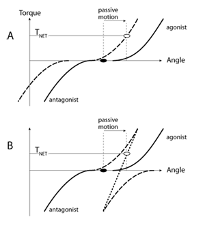 Figure 2 | Originally, both muscles acting at a joint are relaxed (black  dot). In response to passive motion, in panel A the muscle torque-angle  curves ...